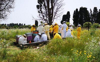 Come si diventa apicoltore? Scopri di più…