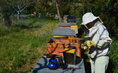 Corsi di apicoltura Sardegna | Iscriviti entro il 30 aprile 2021